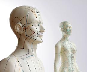 Modelle von 2 Menschen zur Darstellung der Akupunktur in Praxis für Naturheilkunde Groterhorst